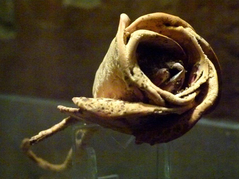 карловарская роза